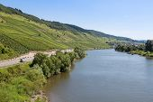 pic of moselle  - Vineyards along German river Moselle near Enkirch - JPG