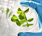 stock photo of modification  - Scientist examining samples with plants - JPG