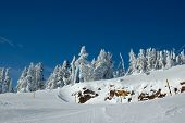 Ski Slope In The Snow Forest In Sunny Winter Day poster
