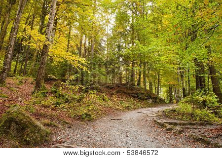 Pathway Throught The Beautiful Autumn Forest Near Brienz,Central Switzerland