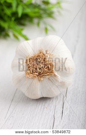 Fresh Whole Garlic Bulb