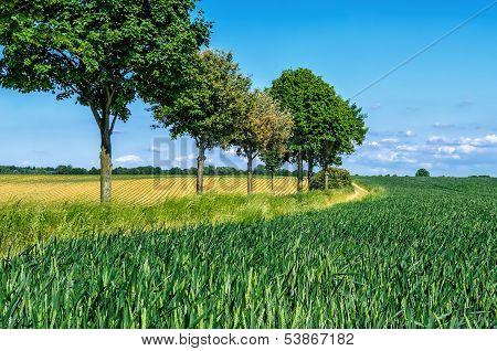 spring tree lane