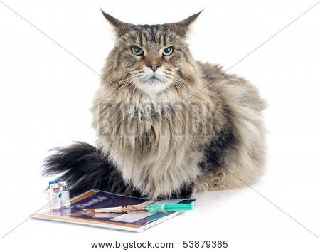 Maine Coon And Syringe