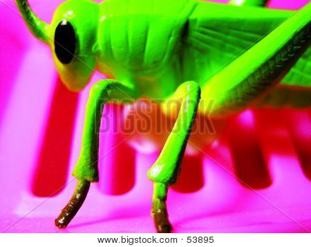 The Green Cricket