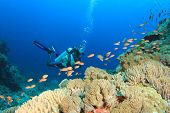pic of biodiversity  - Scuba Diving on coral reef with tropical fish - JPG