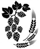 picture of hop-plant  - Stylized hop and ears on a white background - JPG