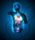 picture of intestines  - Human anatomy abstract design DNA chain at the background - JPG