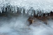picture of icicle  - Icicle frozen on a branch of a tree near a mountain stream - JPG
