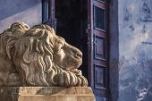 Lion sculpture on Lviv city. Ukraine