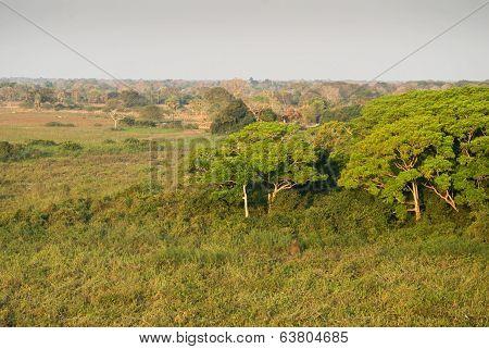 Pantanal Wetland, Brazil