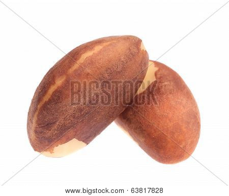 Close up of two brazil nuts.