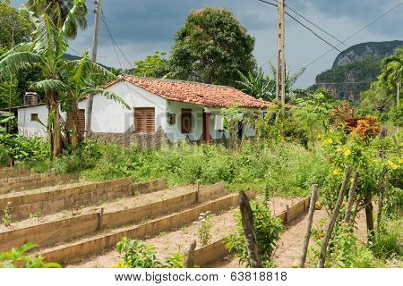 Typical rural house at the Vinales valley in Cuba with mountains in the background