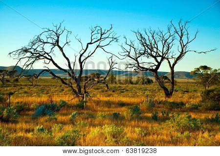 Australian desert, Aboriginal lands