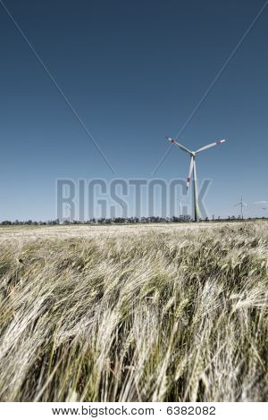 Wind Mill In Grain