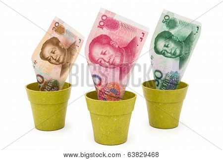 Rmb In Flower Pots With Clipping Path, Concept Of Investment