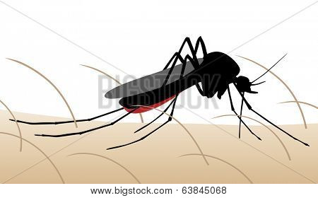 Editable vector illustration of a mosquito sucking blood from human skin