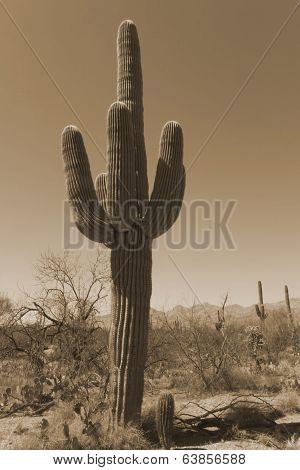 Antique Sepia Saguaro Cactus