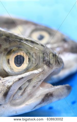 Heads Of Trouts