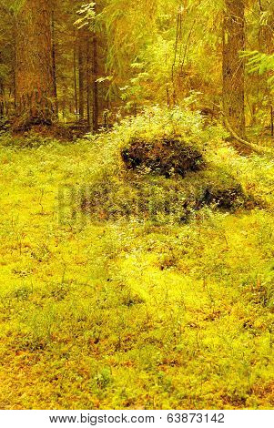 Summer Northern Forest Glade with a Stump