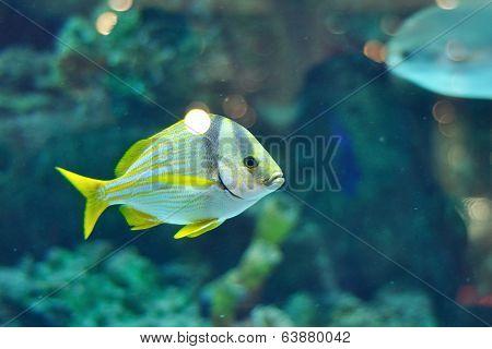 Porkfish Grants