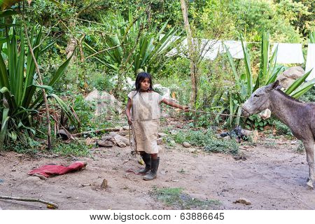 Young Indigenous Boy With A Donkey