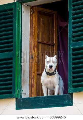 a dog looks curiously out of a window