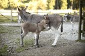 pic of deer family  - Portrait of a donkey family in the deer park - JPG