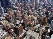 Big City Jungle poster