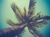 foto of pacific islands  - Retro Filtered Single Palm Tree In Hawaii - JPG