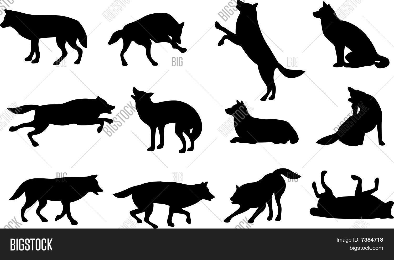Colección De Silueta De Lobo: Wolf Silhouette Vector & Photo