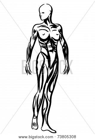 Human Body Anatomy Woman Illustration