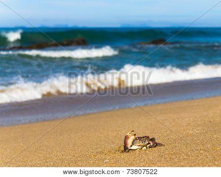 By the Sea Menacing Eyes
