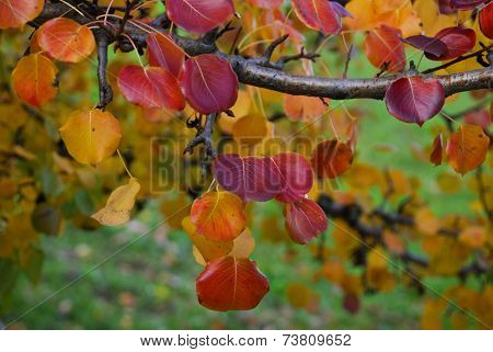 Red Autumn Leaves On A Background Of Green Grass