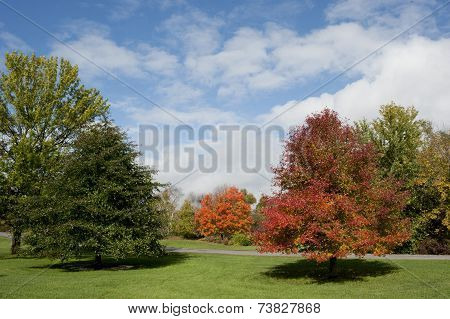 Maple tree in autumn.