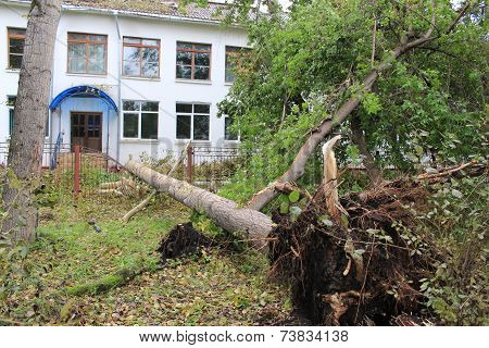 Fallen on the fence of the school poplar after strong winds