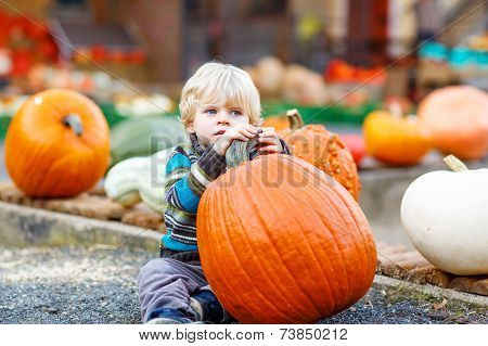 Little Cute Kid Boy Sitting With Huge Pumpkin On Halloween Or Thanksgiving Harvest Festival