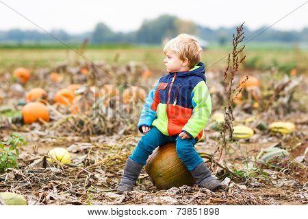 Toddler Boy Having Fun Sitting On Huge  Halloween Pumpkin