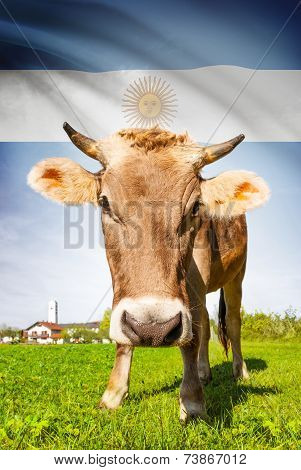 Cow With Flag On Background Series - Argentina