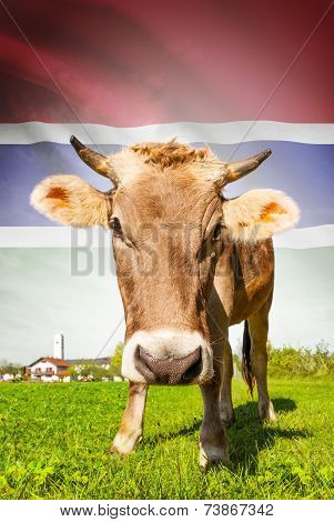 Cow With Flag On Background Series - Gambia