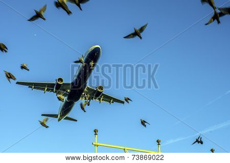 Making Air Space for Birds and Planes Traffic