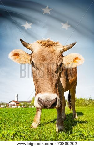 Cow With Flag On Background Series - Federated States Of Micronesia