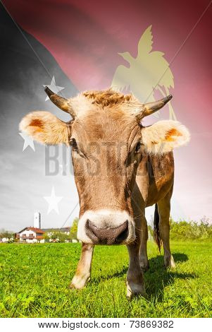 Cow With Flag On Background Series - Papua New Guinea