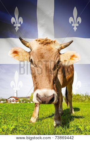 Cow With Flag On Background Series - Quebec