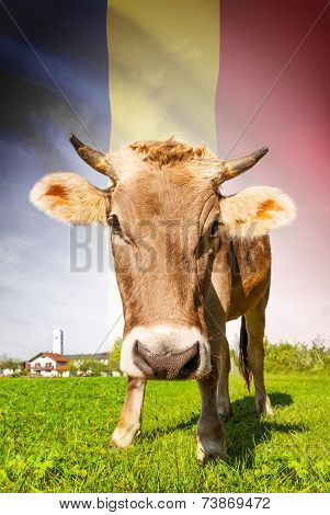 Cow With Flag On Background Series - Romania