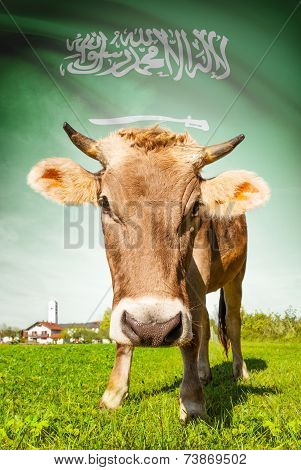 Cow With Flag On Background Series - Saudi Arabia