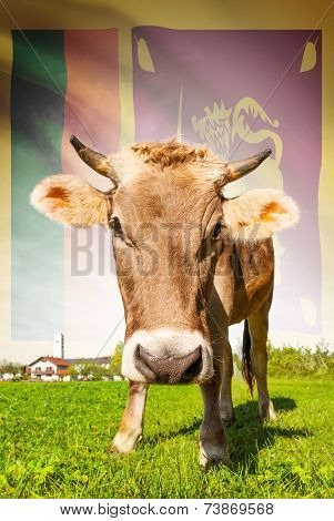 Cow With Flag On Background Series - Sri Lanka