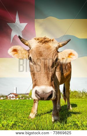 Cow With Flag On Background Series - Togo