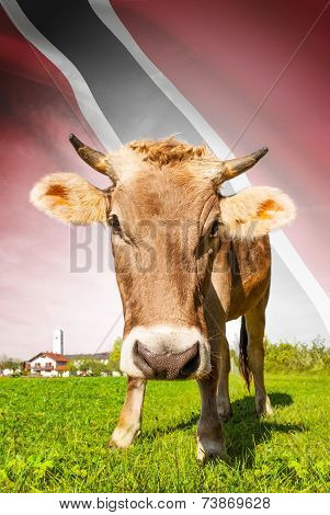 Cow With Flag On Background Series - Trinidad And Tobago