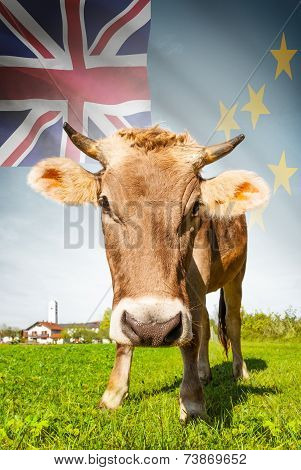 Cow With Flag On Background Series - Tuvalu