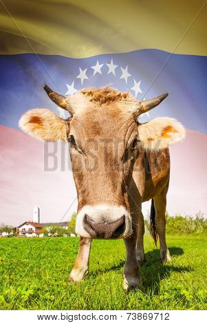 Cow With Flag On Background Series - Venezuela